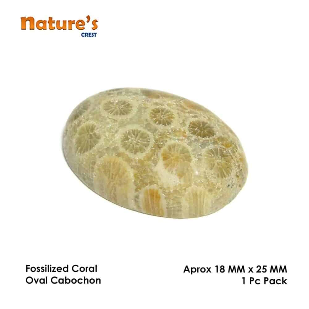 Fossilized Coral Oval Cabochon Nature's Crest CO0029 ₹399.00